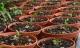 Mua bán hoa lan đột biến tiền tỷ: Chơi dao sắc có ngày đứt tay!