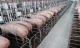 Đại gia chăn nuôi lợn báo lãi tăng hơn 2.000%