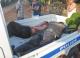 Bốn người thương vong vì… trộm chó