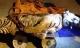 Mẹ và con trai bán xác hổ 140 kg giá 700 triệu đồng
