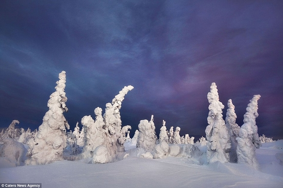 Cây cối đóng băng biến dạng hình thù kỳ quái